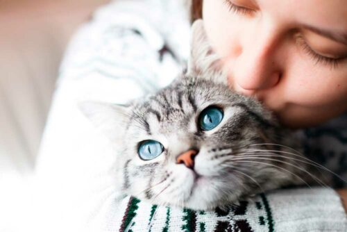 Знайди найкращого в світі котика! 💛💜