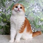 Очаровательный подросший котик Нефрит