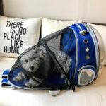 Розкладний рюкзак-переноска для тварин