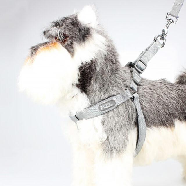 шлея для собаки