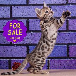Lapa.shop: Породистых котят и щенков покупают здесь